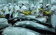 TUNA PRODUCTION INCREASES
